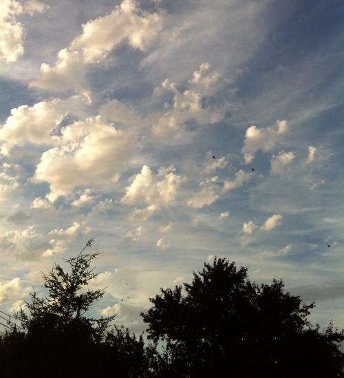 Buttermilk Sky (2)