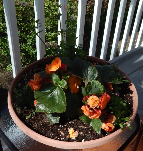 Dish Garden #1