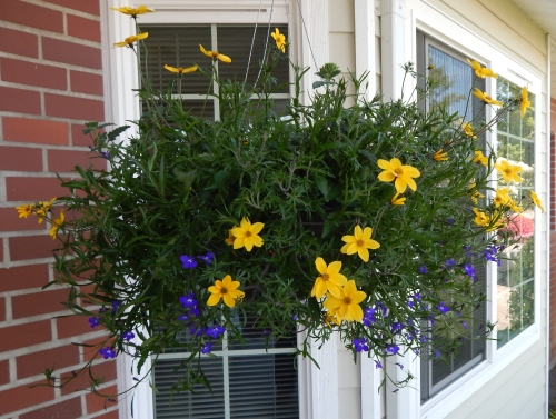 Front Porch Hanging Basket (3)