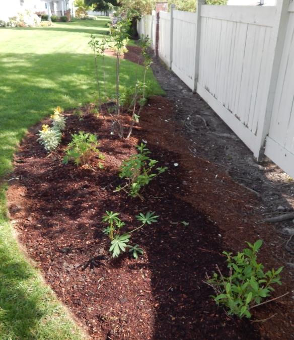 More Plantings (3)