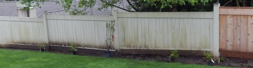 New Garden (2)
