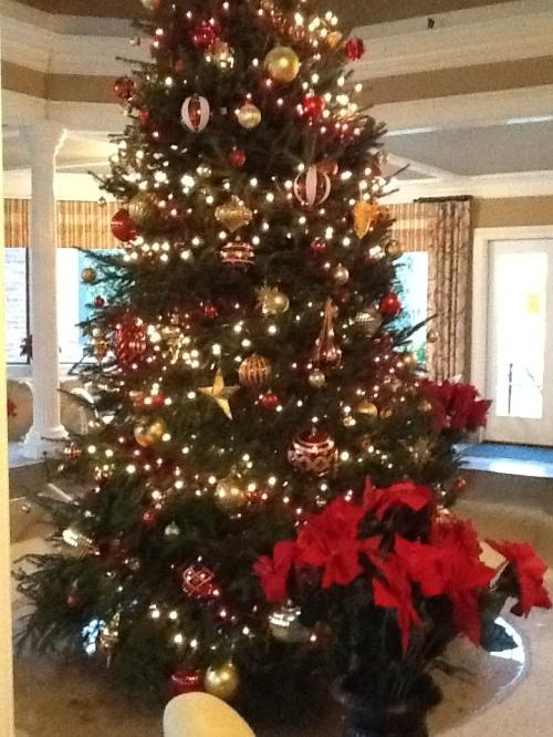 Christmas Tree in TJ