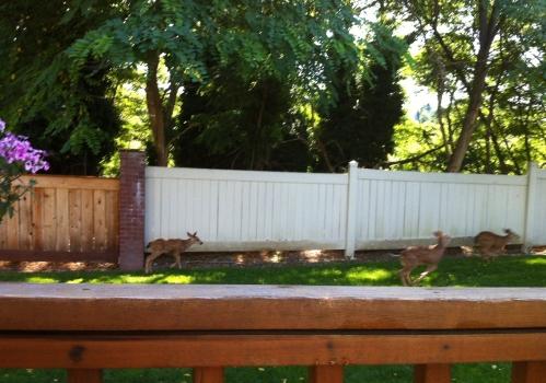 Running of the Deer