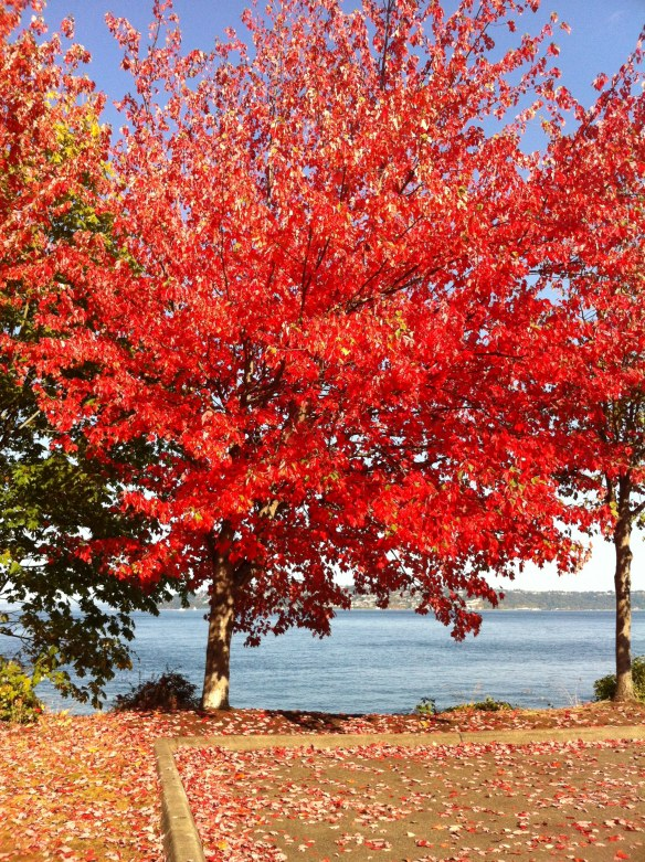 Fall on the Waterfront