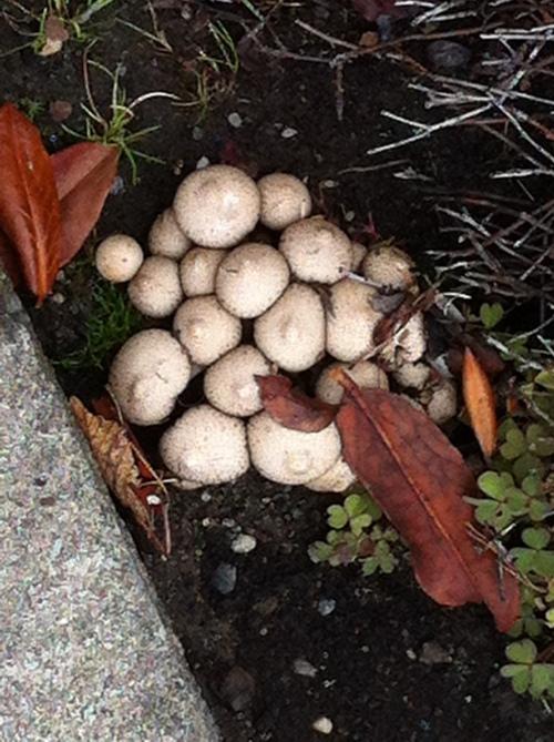 Mushrooms or Toadstools