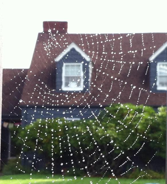 X-Spider's Web